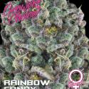 Rainbow Candy Feminised Cannabis Seeds - Growers Choice