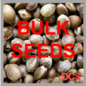 Do-Si-Dos Feminised Cannabis Seeds  | 100 Bulk Seeds
