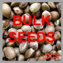 Auto Blueberry Feminised Cannabis Seeds    100 Bulk Seeds