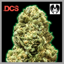 Monster Girl Scout Cookies Feminised Cannabis Seeds | Monster Genetics