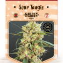 Sour Tangie Feminised Cannabis Seeds | Garden of Green
