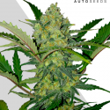 Ultra Lemon Haze Autoflowering Feminised Cannabis Seeds | Auto Seeds