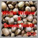 White Widow x Sweet Tooth Feminised Cannabis Seeds | 50 Seed Bulk Pack