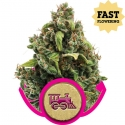 Candy Kush Express (Fast Flowering) Feminised Cannabis Seeds | Royal Queen Seeds