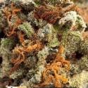 Greengo Bio Haze Auto Feminised Cannabis Seeds | Kera Seeds