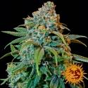 Liberty Haze Feminised Cannabis Seeds | Barney's Farm
