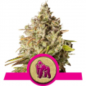 Royal Gorilla Feminised Cannabis Seeds | Royal Queen Seeds