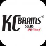 KC Brains Seeds | Discount Cannabis Seeds