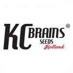 KC Brains Seeds | Discount Cannabis Seeds