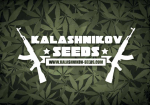 Kalashnikov Seeds | Discount Cannabis Seeds