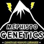 Mephisto Genetics Autoflowering Feminised Cannabis Seeds