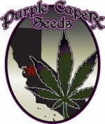 Purple Caper Seeds | Discount Cannabis Seeds