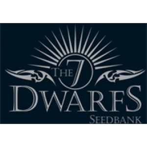 7 Dwarfs Feminised Cannabis Seeds | Discount Cannabis Seeds