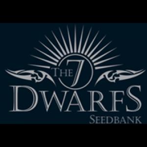 7 Dwarfs Feminised Cannabis Seeds | Discount Cannabis Seeds
