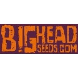 Big Head Seeds | Discount Cannabis Seeds