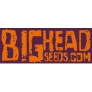 Big Head Seeds | Discount Cannabis Seeds