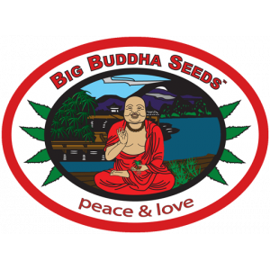 Big Buddha Cannabis Seeds | Discount Cannabis Seeds
