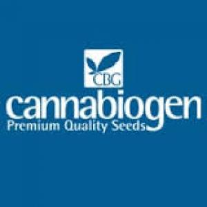 Cannabiogen Cannabis Seeds | Discount Cannabis Seeds