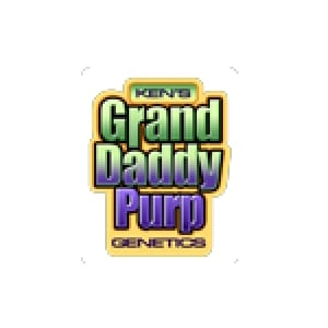 Grand Daddy Purp | Discount Cannabis Seeds