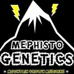 Mephisto Genetics Autoflowering Feminised Cannabis Seeds | Discount Cannabis Seeds