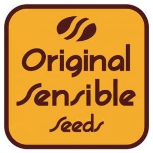Original Sensible Seeds | Discount Cannabis Seeds