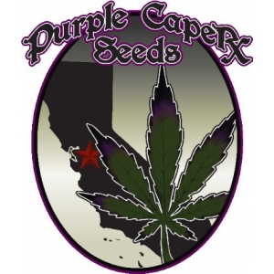 Purple Caper Seeds | Discount Cannabis Seeds