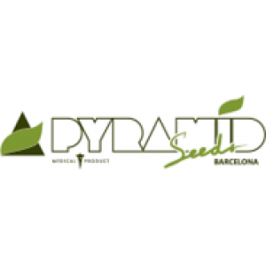 Pyramid Seeds | Discount Cannabis Seeds