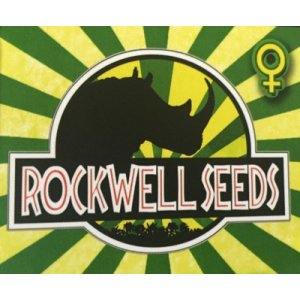 Rockwell Seeds from Discount Cannabis Seeds
