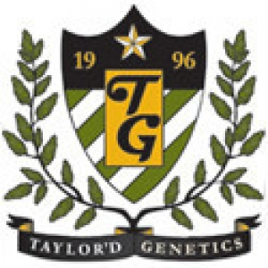 Taylor'd Genetics Seeds | Discount Cannabis Seeds