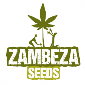 Zambeza Seeds | Discount Cannabis Seeds