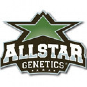 Allstar Genetics Seeds | Discount Cannabis Seeds
