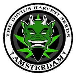 Devil's Harvest Cannabis Seeds | Discount Cannabis Seeds