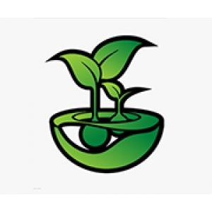 Feminized Seeds | Discount Cannabis Seeds