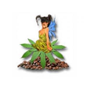 Sativa Seedbank | Discount Cannabis Seeds