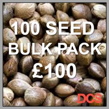Critical + Feminised Cannabis Seeds  | 100 Bulk Seeds