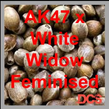 AK47 x White Widow Feminised  | 50 Seed Bulk Pack