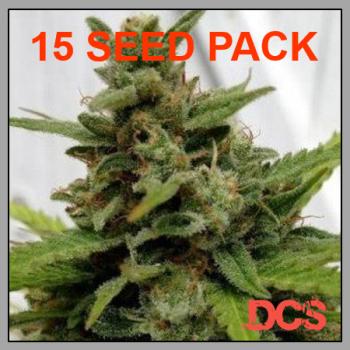 Auto Critical x Auto AK Feminised Cannabis Seeds | Discount Cannabis Seeds