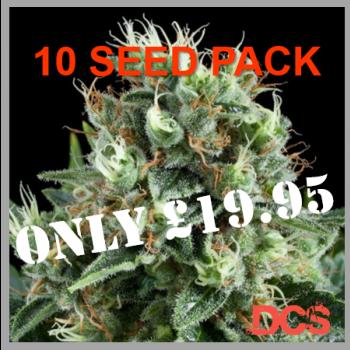 White Widow Feminised | Discount Cannabis Seeds