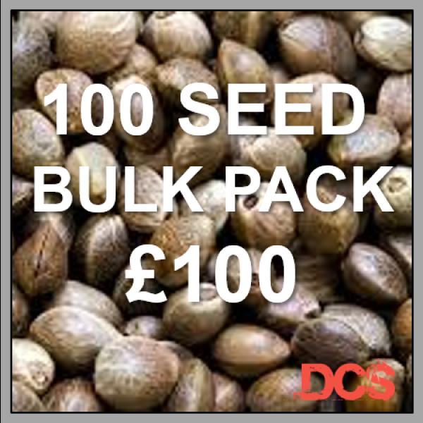 Northern Lights Auto Feminised Cannabis Seeds | 100 Seed Bulk Pack