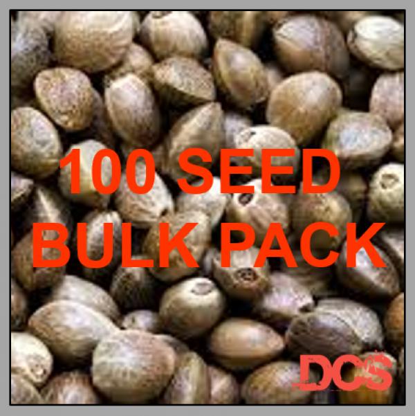 Auto Haze x Widow Feminised Cannabis Seeds    100 Bulk Seeds