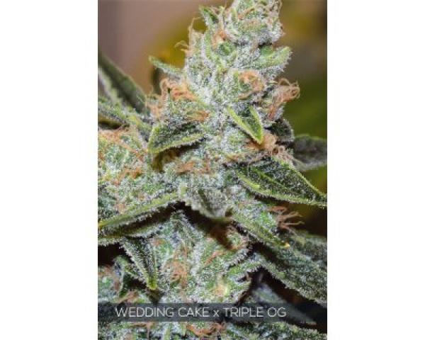 Wedding Cake x Triple OG Feminised Cannabis Seeds | Vision Seeds