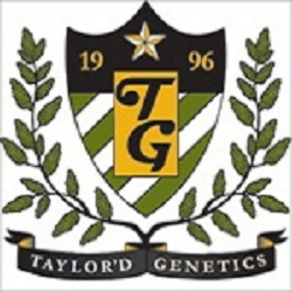 The NHS Feminised Cannabis Seeds | Taylor'd Genetics Seeds