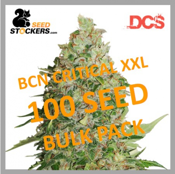 BCN Critical XXL Feminised Cannabis Seeds   Seed Stockers