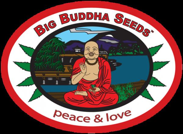 Big Buddha Cannabis Seeds | Discount Cannabis Seeds