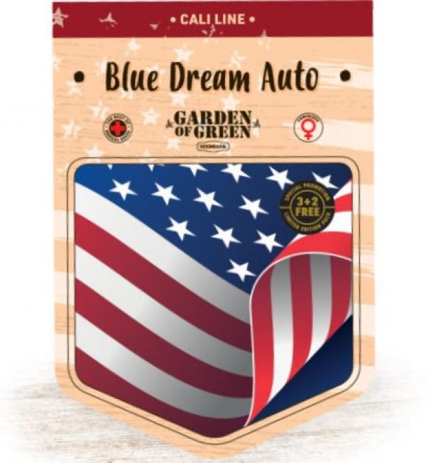 Blue Dream Auto Feminised Cannabis Seeds   Garden of Green