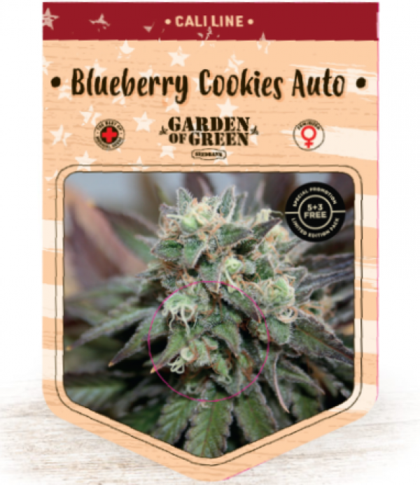 Blueberry Cookies Auto Feminised Cannabis Seeds | Garden of Green