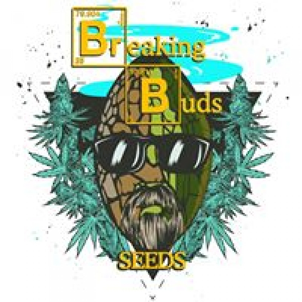 Breaking Buds Feminised Cannabis Seeds | Discount Cannabis Seeds