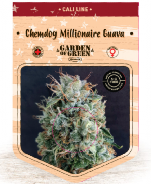 Chemdog Millionaire Guava Feminised Cannabis Seeds | Garden of Green