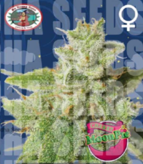 Cherry Moon Pie Feminised Cannabis Seeds | Big Buddha Seeds