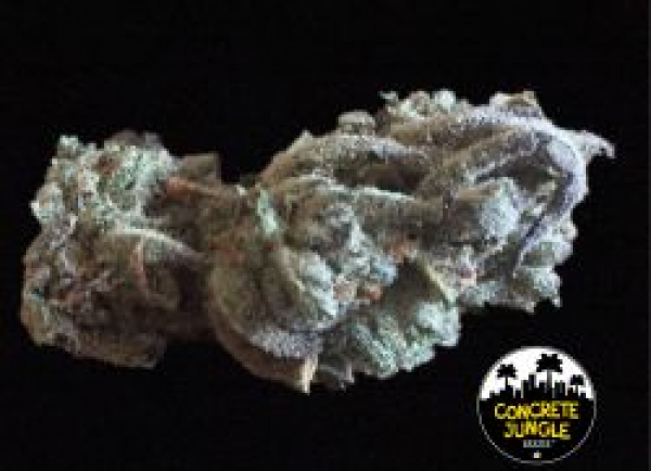 Concrete Banana Feminised | Concrete Jungle Seeds